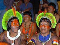 Pan Amazônia: 'Se falta o ar, compremos os pulmões'. 26439.jpeg