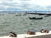 Verdes querem saber causa da morte de peixes no Tejo. 27445.jpeg