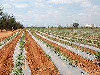 Angola: Mecanagro prepara 30.000 hectares de terras