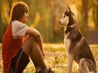 Como comunicar com nossos animais de estimação. 26447.jpeg
