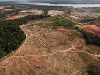 Bolsonaro ameaça a vida no Amazonas, denúncia ex-presidenta. 31451.jpeg