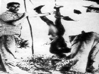 A Amazônia e o genocídio indígena. 33452.jpeg