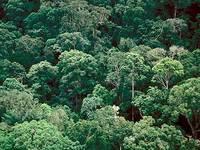 Novas fronteiras de exploração mineral, ameaça ecológica
