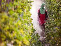 Mudança em rótulo de pesticida que não apresenta risco de morte. 31463.jpeg