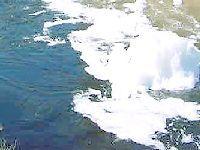 Canas de Senhorim - Os Verdes Alertam para Atentado Ambiental nas Imediações da ETAR. 32466.jpeg