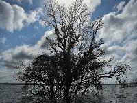 Belo Monte: sonho acabou e pesadelo continua. 34467.jpeg