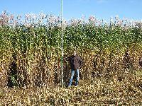 Os Verdes Recomendam ao Governo que Potencie a Biomassa Florestal. 33469.jpeg