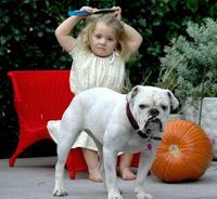 Como proteger-se do ataque de um cão de estimação