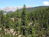 Bangladesh plantará 10 milhões de árvores. 32479.jpeg