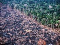 Desmatamento na Amazônia cai 62,8% em julho