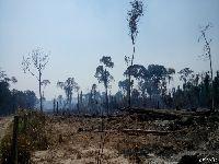 A cada minuto, 533 árvores são derrubadas no Xingu. 31490.jpeg