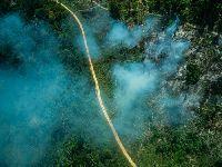 ISA e sociedade civil exigem aumento no orçamento de 2021 contra destruição da floresta. 34490.jpeg
