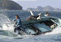 Pescador japonês afogou-se tentando salvar um cachalote (vídeo)