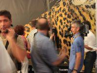 Festival de Locarno começa hoje, dia 7. 31491.jpeg