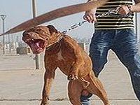 Proibição efetiva de testes em animais. 22494.jpeg