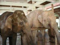 """""""O Elefante que veio de Cabo Verde"""""""