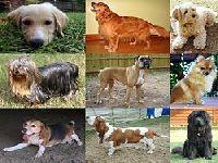 Aprovada proposta do PEV para condições dignas na Provedoria dos Animais. 33524.jpeg