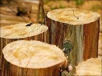 Desmatamento tem queda de 90% no último trimestre
