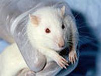 Estrela mundial Kesha faz apelo para que Brasil proíba todos os testes de cosméticos em animais. 21529.jpeg