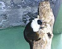 Zoológico Municipal de Bauru  oferece uma recompensa de R$ 1.500