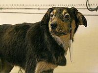 Alternativas à experimentação animal. 21543.jpeg