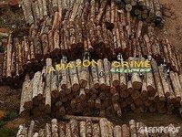 Brasil: Quem vende a madeira ilegal?