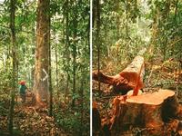 Ong Cool Earth recebe doações por site para comprar terras na região amazônica