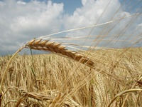 Brasil aumenta safra de grãos em 8,5%