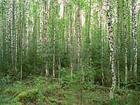 Chegou a hora dos verdes na Rússia
