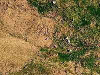 Os Verdes chocados com novo abate de árvores em Almeirim. 30571.jpeg