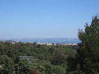 Os Verdes promovem Carta Aberta pela preservação das árvores na cidade de Lisboa. 30573.jpeg