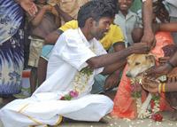 Indiano se casou com cadela (foto)