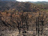 31 de outubro - Pedrógão Grande, Sertã e Oleiros - Verdes visitam áreas ardidas. 27583.jpeg