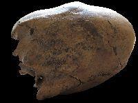 Cientistas descobrem esqueletos de adolescentes do período das invasões bárbaras na Europa de Leste. 31591.jpeg