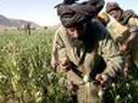 OTAN, Afeganistão e ópio