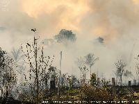 ISA mostra Terras Indígenas mais afetadas por incêndios na Amazônia brasileira. 31604.jpeg