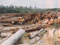 Desmatamento na Amazônia cai 89% em maio