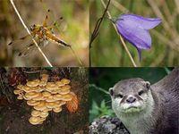 Biodiversidade: Alerta Vermelha!