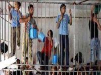 Israel prende meninos palestinos em jaulas ao ar livre. 21612.jpeg