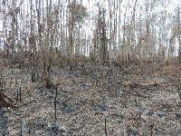 Em nota Cimi do Acre exige apuração de incêndio criminoso em terra do povo Huni Kuin. 31612.jpeg