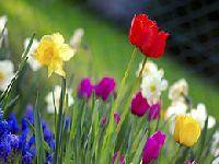 A Primavera Europeia como antídoto à falsa dicotomia. 30619.jpeg