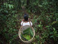 Biodiversidade: contagem regressiva. 32623.jpeg
