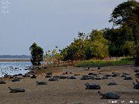 Pará cria quatro Unidades de Conservação. 24624.jpeg