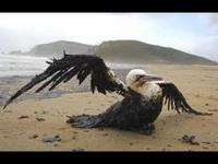 Nova escala de desastre ambiental ameaça Golfo do México