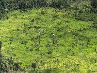 Estrada ilegal é identificada em Terra Indígena de isolados no Xingu. 30641.jpeg