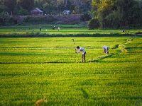 As cooperativas são fundamentais no desenvolvimento do Vietname. 34641.jpeg