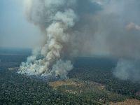 Quanta destruição uma só pessoa consegue causar na Amazônia?. 31643.jpeg