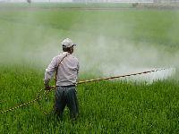 Governo Bolsonaro teve liberação recorde de 945 agrotóxicos em 2020. 34653.jpeg