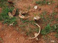 Sítio arqueológico é descoberto durante construção de escola