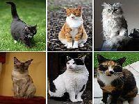 Os Verdes exigem esclarecimentos sobre os abrigos de gatos de rua. 32655.jpeg